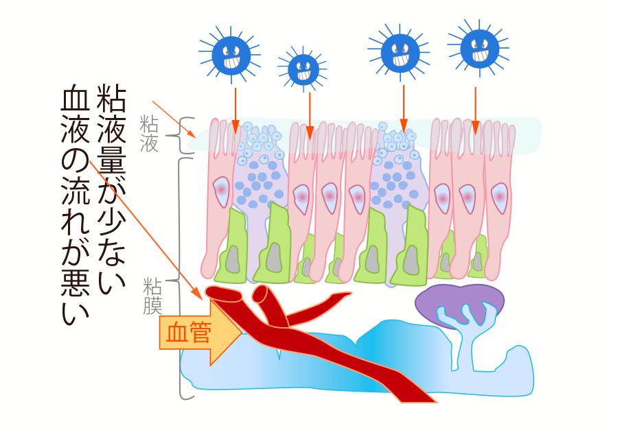 乾燥や血流悪化でウイルスは侵入しやすい